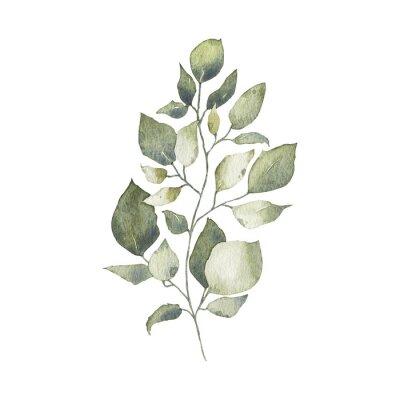 Nálepka Watercolor tropical greenery floral leaf plant forest herb spring