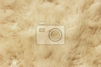 White shaggy natural sheep fur texture for background