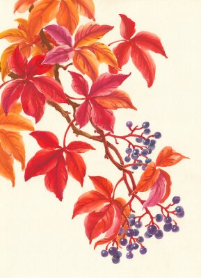 Nálepka Дикий виноград осенью, красные листья и ягоды, живопись.