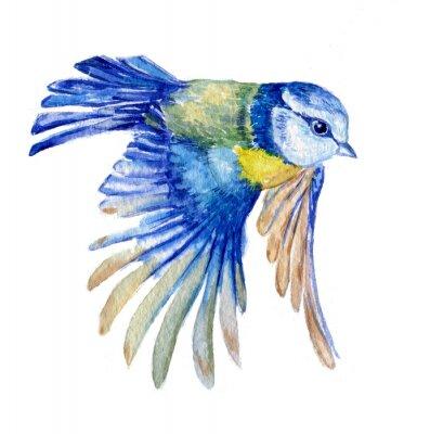 Nálepka птица синица