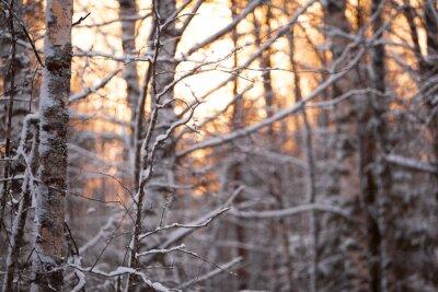 Nálepka Берёзовый лес