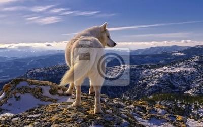 Nálepka Волк