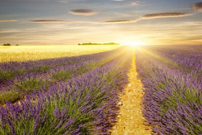 Nálepka Západ slunce na levandule a pšeničná pole