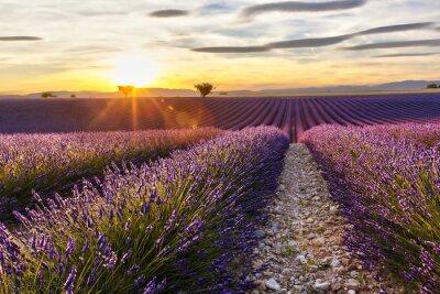 Nálepka Západ slunce na levandule pole s dvěma stromy