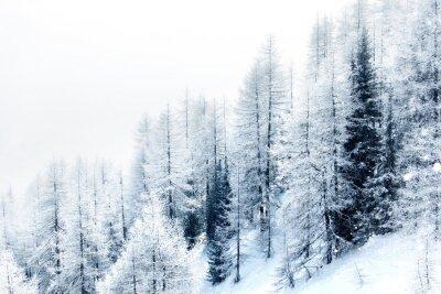 Nálepka Zasněžené lesní