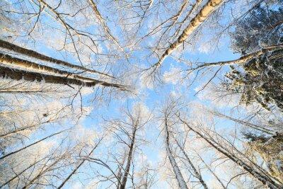 Nálepka Zasněžené strom perspektivní pohled vzhlédla