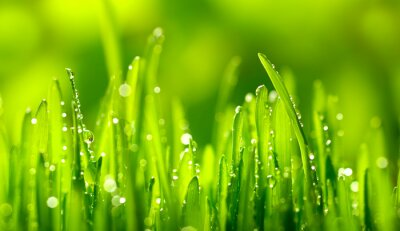 Nálepka Zelená tráva