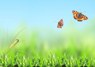 Nálepka Zelená tráva, housenka a motýl