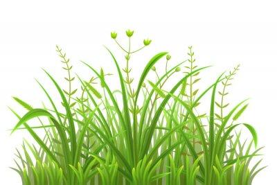 Nálepka Zelená tráva vzor na bílém pozadí