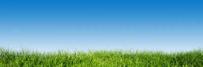 Nálepka Zelené trávy na modrou jasnou oblohou, jarní příroda téma. Panoráma