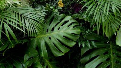 Nálepka Zelené tropické listy Monstera, palmy, kapradí a okrasné rostliny pozadí pozadí