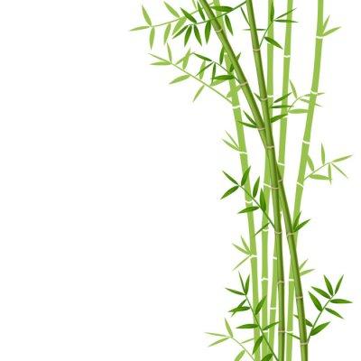 Nálepka Zelený bambus na bílém pozadí, vektorové ilustrace