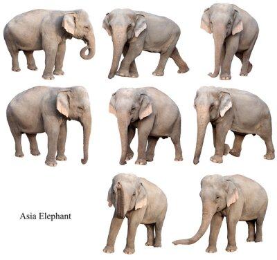 Nálepka Žena Asijský slon izolované