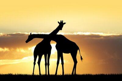Nálepka Žirafa silueta při západu slunce