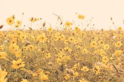 Nálepka žlutý květ pole louka vinobraní retro