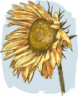 Nálepka zralé slunečnice