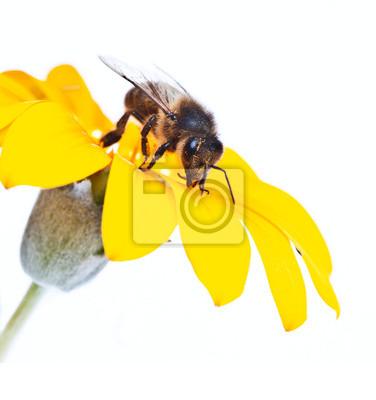Obraz Abeja en la flor