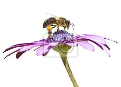Obraz abeja trabajando