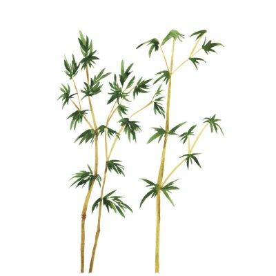 Obraz Abstrakt divoké bambusové stromy na bílém pozadí. Akvarel ručně kreslenými vektorové ilustrace.