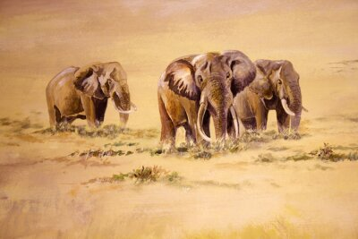 Obraz African Elephant, Jižní Afrika