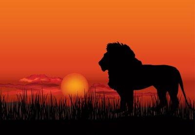 Obraz Africké krajina s zvíře lva siluetu. Savana západ slunce na pozadí
