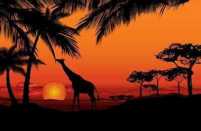 Obraz Africké krajina s zvíře žirafa siluetu. Savana přírody západ slunce na pozadí