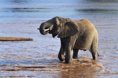 Obraz Afričtí sloni v savaně