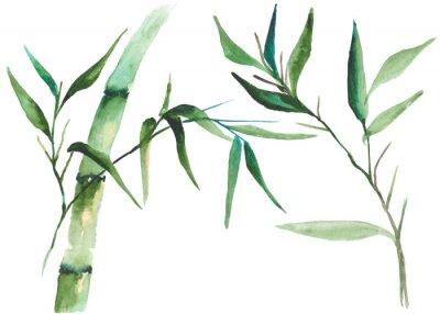 Obraz Akvarel bambusové ilustrace