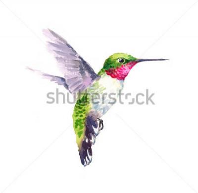 Obraz Akvarel Bird Kolibřík létající ruka kreslená letní zahrada Ilustrace izolované na bílém pozadí