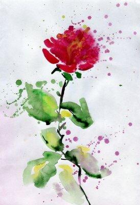 Obraz akvarel červená růže.