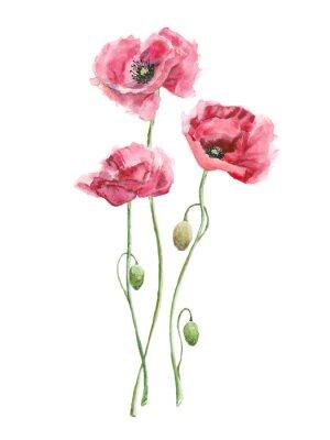 Obraz akvarel Červené květiny (vlčí máky)
