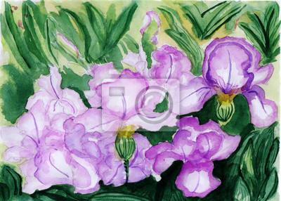 akvarel ilustrace, květy v plném květu