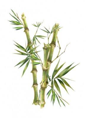 Obraz Akvarel ilustrace obraz bambusových listů, na bílém pozadí