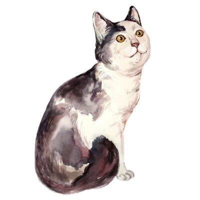 Obraz Akvarel ilustrace ošklivé kočka zmateně