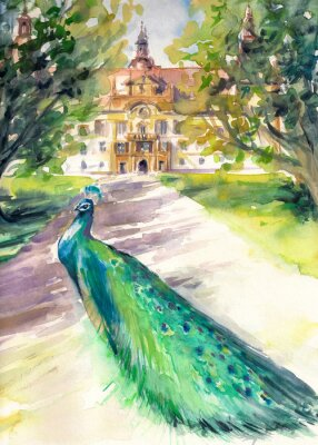 Obraz Akvarel ilustrace páva v parku a průčelí zámku Eggenberg v Graz, Štýrsko, Rakousko