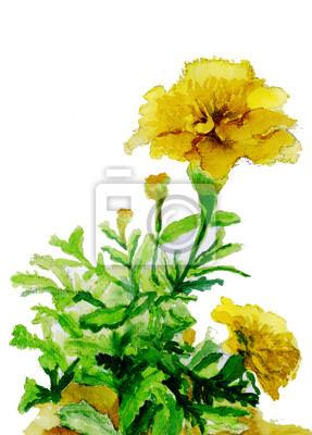 akvarel ilustrace, žluté květy skica