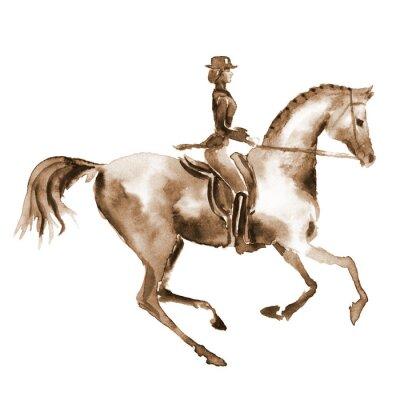 Obraz Akvarel jezdec a drezurní koně na bílém. Jezdecký sport. Ruční malba ilustrace koňské pozadí.