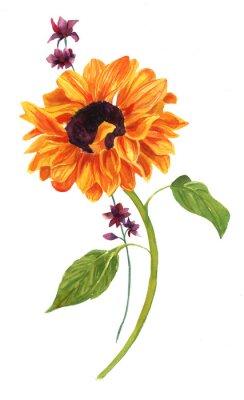 Obraz Akvarel kresba zlaté slunečnice se zelenými listy na bílém zázemí