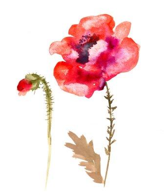 Obraz Akvarel květina mák