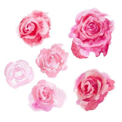 Obraz Akvarel květiny. Růže