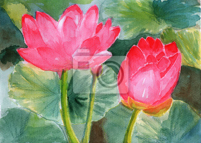 akvarel lotus