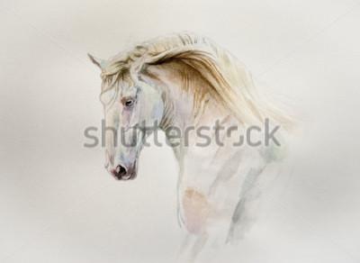 Obraz akvarel lusitano kůň portrét