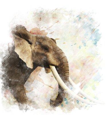 Obraz Akvarel Obrázek slona