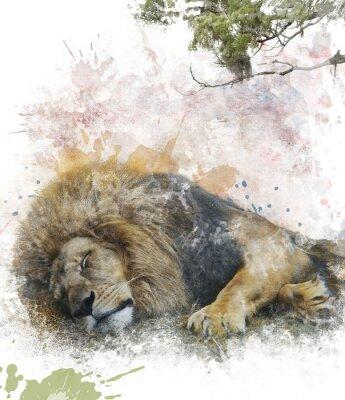 Obraz Akvarel Obrázek Spící lev