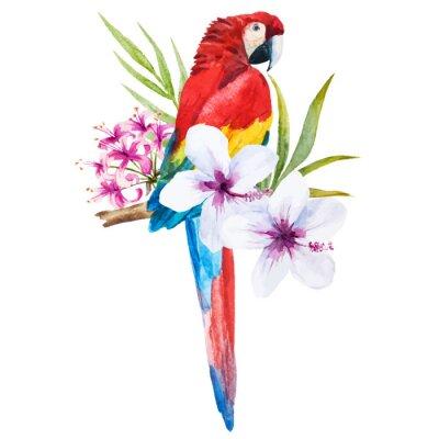Obraz Akvarel papoušek