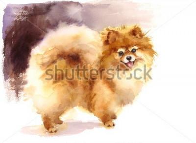 Obraz Akvarel Pomeranian Portrét Ručně Malované Cute Zvířata Ilustrace