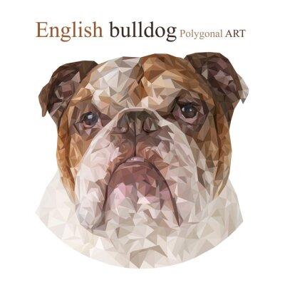 Obraz Anglický buldok. Polygonální kresba ..