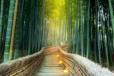 Obraz Arashiyama Bamboo Forest