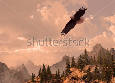 Obraz Bald eagle soaring in the Rocky Mountain high country.