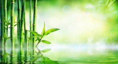 Obraz Bamboo Background - svěží zeleň s odrazem ve vodě